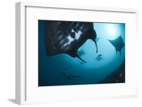 Manta Rays-Matthew Oldfield-Framed Art Print