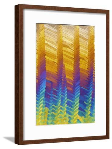 Caffeine Crystals, Light Micrograph-David Parker-Framed Art Print