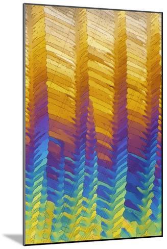 Caffeine Crystals, Light Micrograph-David Parker-Mounted Photographic Print