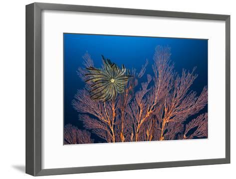 Sea Fan And Crinoid-Matthew Oldfield-Framed Art Print