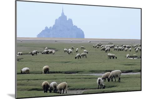 Sheep Grazing-David Nunuk-Mounted Photographic Print