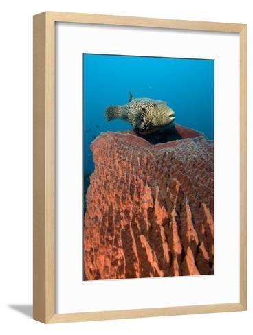 Map Pufferfish-Matthew Oldfield-Framed Art Print