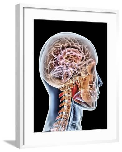 Internal Brain Anatomy, Artwork-PASIEKA-Framed Art Print