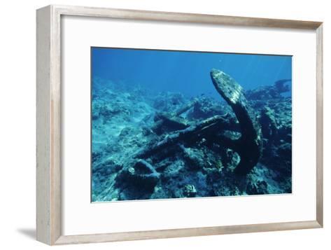 Anchor-Alexis Rosenfeld-Framed Art Print