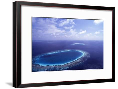 Coral Reef-Alexis Rosenfeld-Framed Art Print
