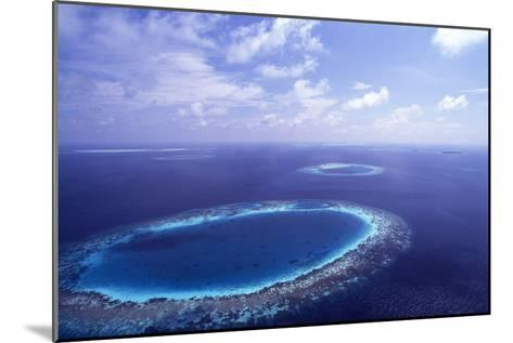 Coral Reef-Alexis Rosenfeld-Mounted Photographic Print