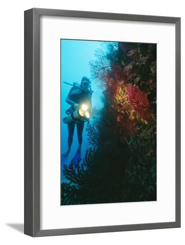 Scuba Diver-Alexis Rosenfeld-Framed Art Print