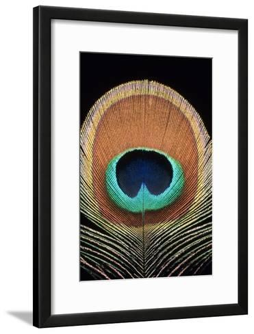 Peacock Feather-Dr. Morley Read-Framed Art Print
