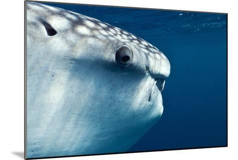 Whale Shark Eye-Alexis Rosenfeld-Mounted Photographic Print