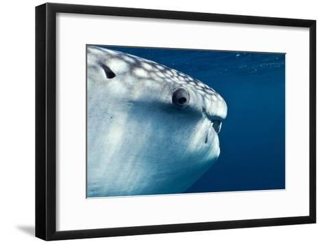 Whale Shark Eye-Alexis Rosenfeld-Framed Art Print
