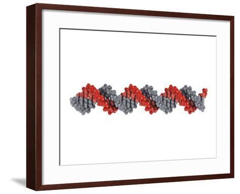 B-DNA Molecule-Visual Science-Framed Art Print