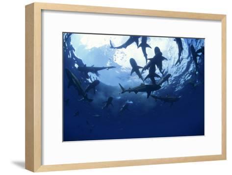 Blacktip Reef Sharks-Alexis Rosenfeld-Framed Art Print