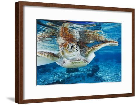 Green Turtle-Alexis Rosenfeld-Framed Art Print