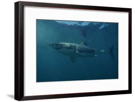 Great White Shark-Alexis Rosenfeld-Framed Art Print
