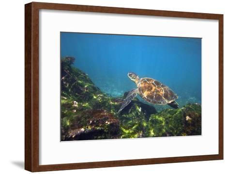 Green Sea Turtle-Peter Scoones-Framed Art Print