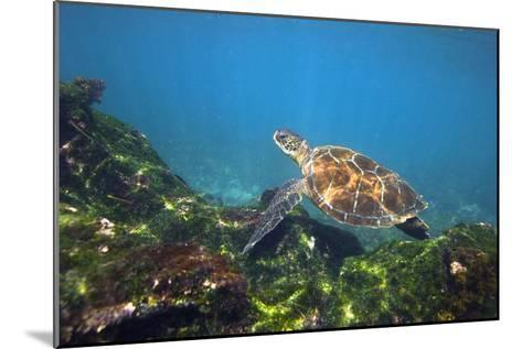 Green Sea Turtle-Peter Scoones-Mounted Photographic Print