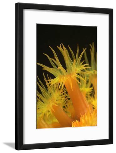Coral-Peter Scoones-Framed Art Print