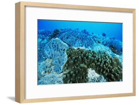 Coral Colonies-Alexis Rosenfeld-Framed Art Print