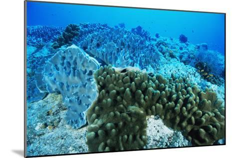 Coral Colonies-Alexis Rosenfeld-Mounted Photographic Print