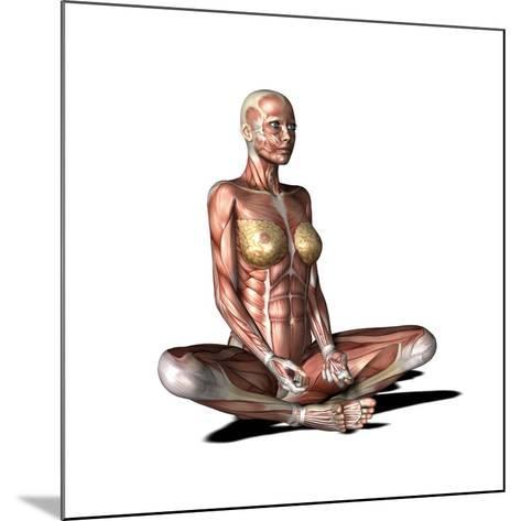 Female Muscles, Artwork-Friedrich Saurer-Mounted Photographic Print