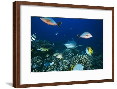 Lemon Shark-Alexis Rosenfeld-Framed Art Print