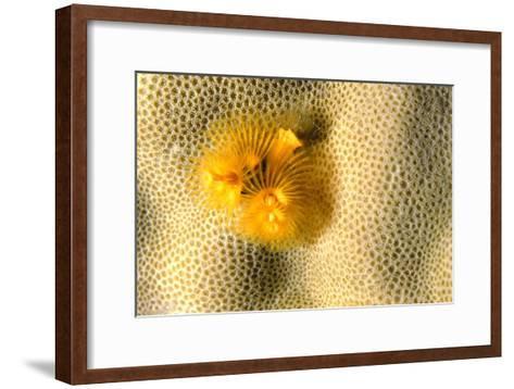 Christmas Tree Worm-Alexis Rosenfeld-Framed Art Print