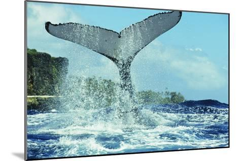 Humpback Whale's Tail-Alexis Rosenfeld-Mounted Photographic Print