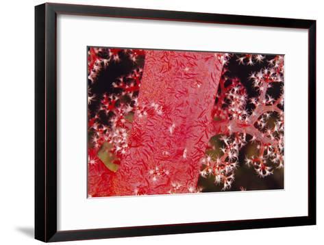 Soft Coral Polyps-Alexis Rosenfeld-Framed Art Print
