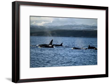 Killer Whales-Alexis Rosenfeld-Framed Art Print