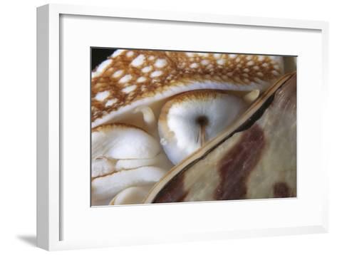 Nautilus Eye-Alexis Rosenfeld-Framed Art Print