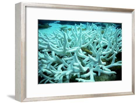 Bleached Coral-Peter Scoones-Framed Art Print