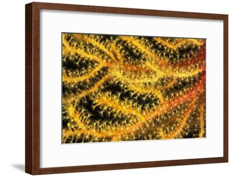 Sea Fan-Alexis Rosenfeld-Framed Art Print