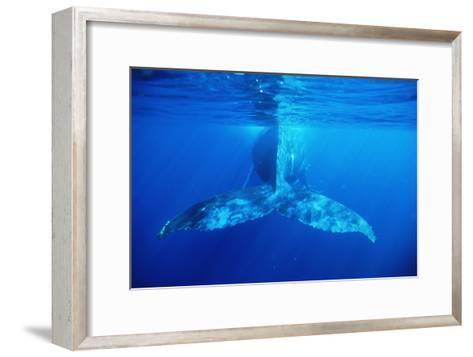 Humpback Whale's Tail-Alexis Rosenfeld-Framed Art Print