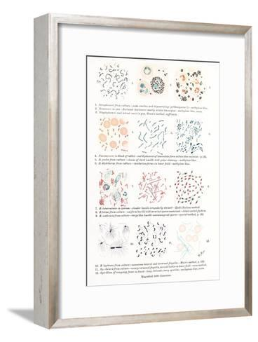 Bacteria, Historical Artwork-Middle Temple Library-Framed Art Print