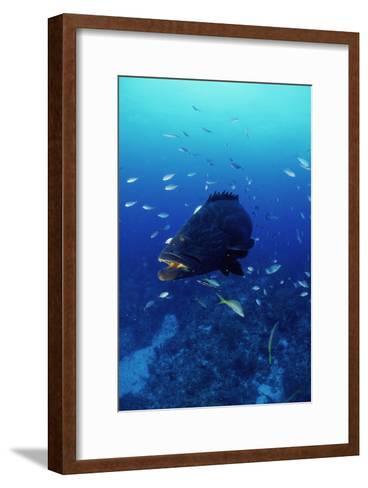Grouper-Alexis Rosenfeld-Framed Art Print