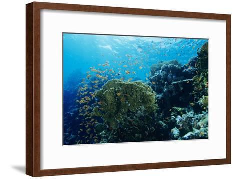 Coral Reef In the Red Sea-Alexis Rosenfeld-Framed Art Print