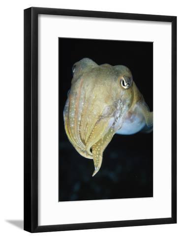 Cuttlefish-Alexis Rosenfeld-Framed Art Print