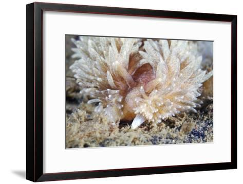 Shaggy Mouse Nudibranch-Alexander Semenov-Framed Art Print