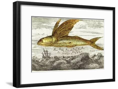 Flying Fish, 17th Century Artwork-Middle Temple Library-Framed Art Print