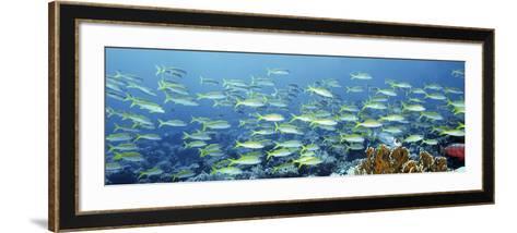 Reef Scene-Alexander Semenov-Framed Art Print