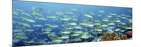 Reef Scene-Alexander Semenov-Mounted Photographic Print