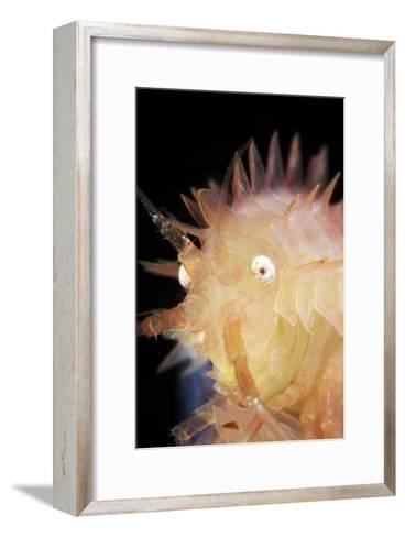 Amphipod Crustacean-Alexander Semenov-Framed Art Print