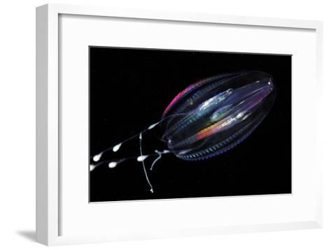 Comb Jelly-Alexander Semenov-Framed Art Print
