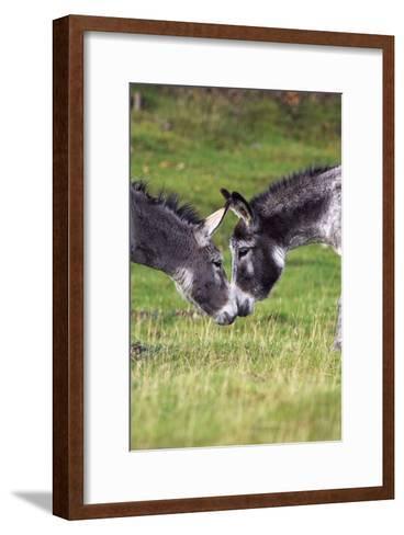 Donkeys Touching Noses-Duncan Shaw-Framed Art Print
