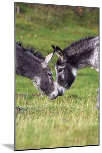 Donkeys Touching Noses-Duncan Shaw-Mounted Photographic Print