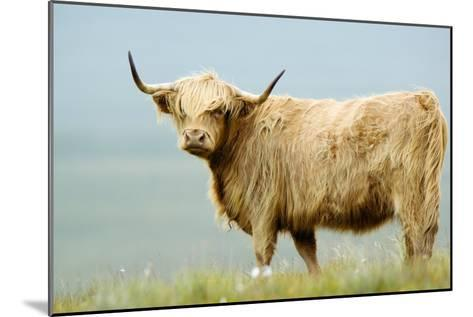 Highland Cow-Duncan Shaw-Mounted Photographic Print