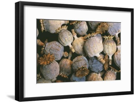 Dried Opium Poppies-Alan Sirulnikoff-Framed Art Print