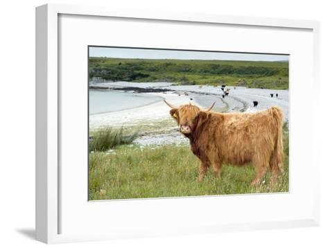 Highland Cattle by the Sea-Duncan Shaw-Framed Art Print