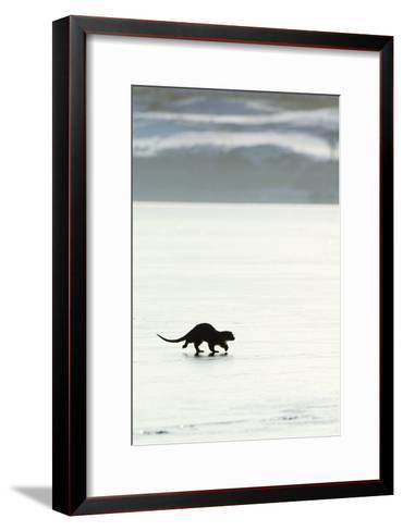 European Otter on Sea Ice-Duncan Shaw-Framed Art Print