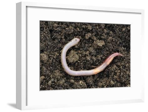 Common Earthworm-Colin Varndell-Framed Art Print